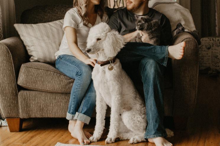 animais de estimação em imóveis arrendados